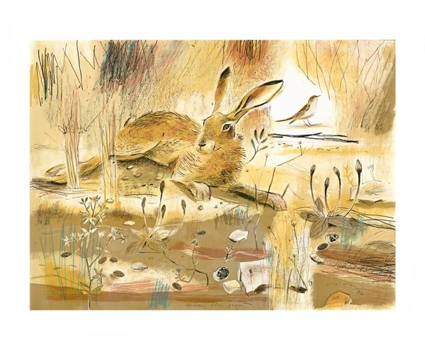 Resting Hare By Andrew Waddington A049