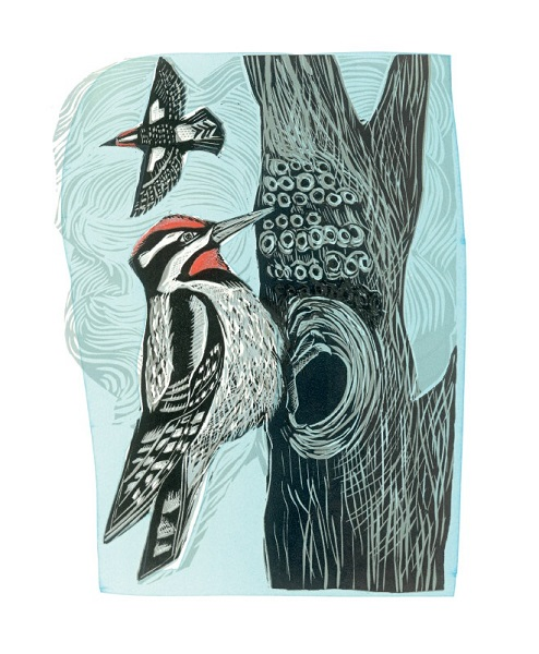 'Lesser Spotted Woodpecker' by Angela Harding (A916) * NEW for 2021