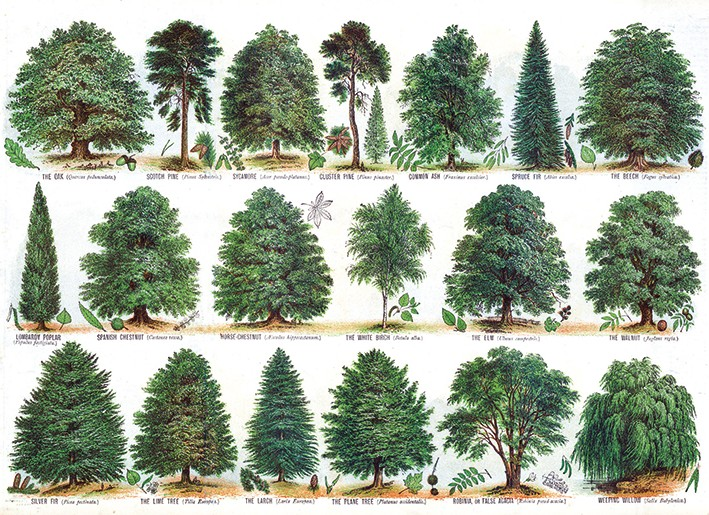 Our British Forest Trees By Unknown V035