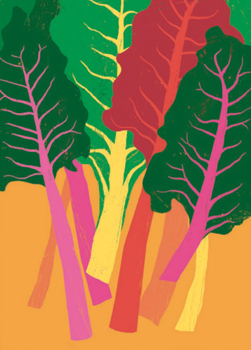 Rainbow Chard By Ana Zaja Petrak